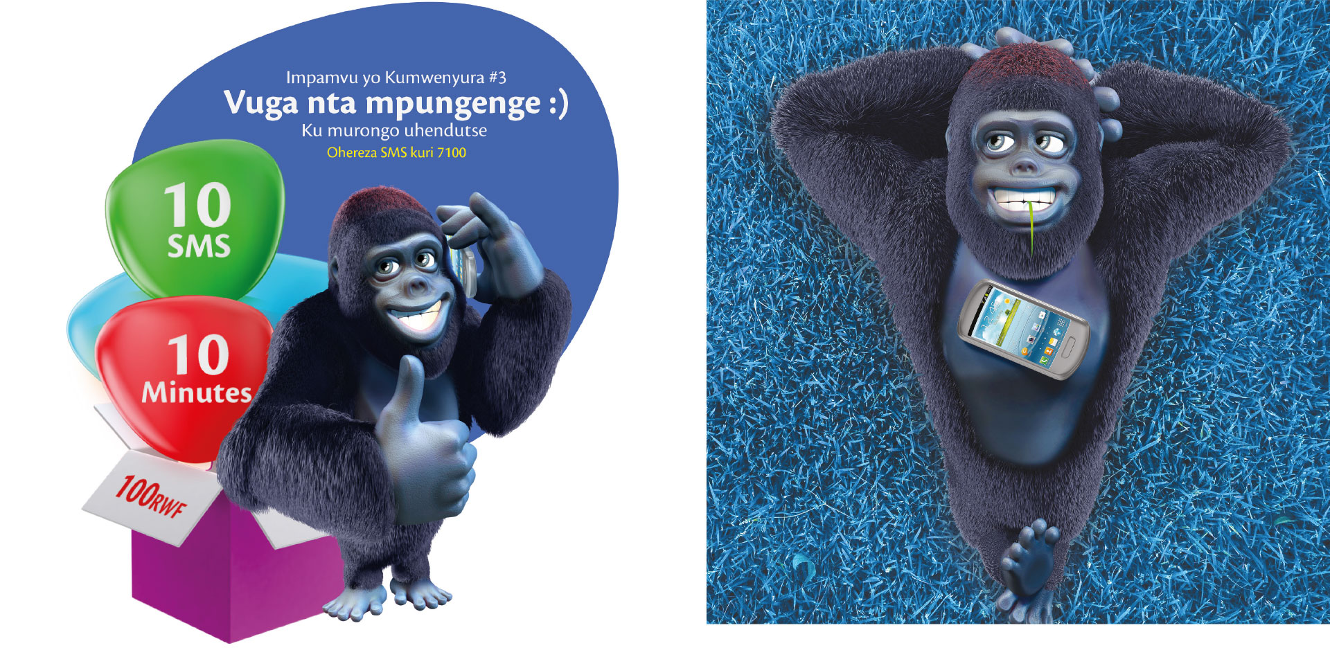 tigo-maimuta