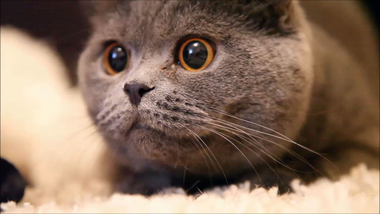 Кот удивился гифка